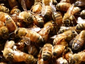Bee enmasse